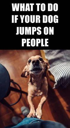 Doberman Cookie Cutter Chien Chiot Pet Treat Puppy Pupcake Topper