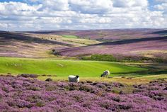 North York Moors by Richard Watson, winner of The Finest View category of the Prince's Countryside Fund Photographic competition 2012 Yorkshire England, North Yorkshire, Yorkshire Dales, Kingdom Of Northumbria, Great Places, Places To See, Thing 1, Photography Competitions, Photo Competition