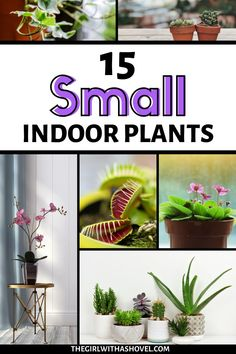 Are you looking for something to add to your shelves, side table, or corner space? Regardless of where it is, these small houseplants are perfect for decorating even the smallest of spaces! #fortheloveofplants #decoratewithplants Small Indoor Plants | Houseplants for Small Spaces | Indoor Plants for Small Spaces | Small Houseplants | Houseplants for Decorating Bookshelves | Interior Design | Home Design |