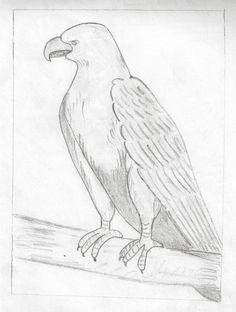Pencil Art Drawings | Pencil drawing of Hawk | My Pencil Drawing Art