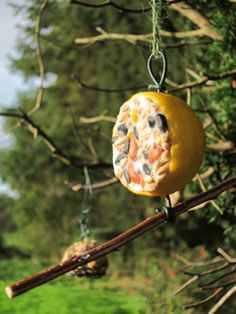 Homemade treats for thebirds - Blog - gardening with you, your kids, your community