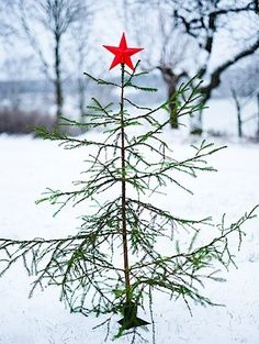 Christmas time is here! Almost but not quite a Charlie Brown Christmas Tree. Christmas Time Is Here, Merry Christmas To All, Noel Christmas, Country Christmas, Winter Christmas, Simple Christmas, Outdoor Christmas, Christmas Tattoo, Primitive Christmas