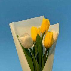The Most Beautiful Garden Flowers - Flower Aesthetic, Blue Aesthetic, Aesthetic Photo, Aesthetic Pictures, Tulips Flowers, Planting Flowers, Beautiful Flowers, Cactus Plante, Karten Diy