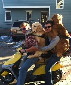 dogs on mopeds, dogs riding mopeds, funny dogs on mopeds