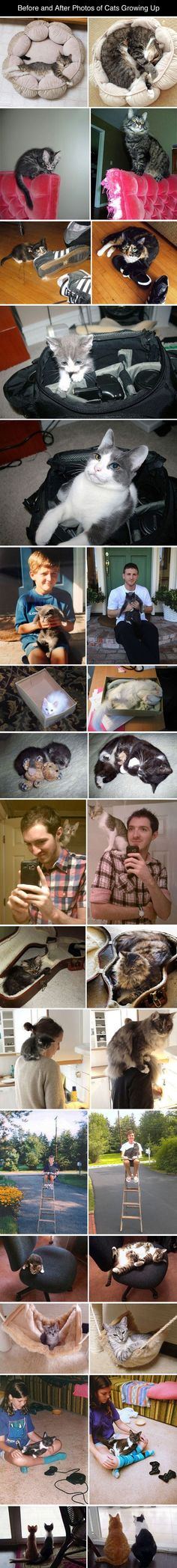 before and after photos of cats growing up