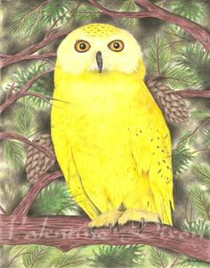 Yellow Owl Perch artwork drawing $99 - $149 size preference click website Artwork Drawings, Owl, Bird, Website, Abstract, Yellow, Animals, Summary, Animales