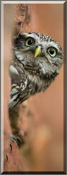 Who cares when I sleep ??? !!!  #owl cute #Fotograf: SiMa-Photos