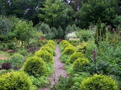 The importance of evergreen shrubs in your mixed border   Pretty Purple Door Evergreen Landscape, Evergreen Garden, Evergreen Shrubs, Perennial Garden Plans, Garden Shrubs, Boxwood Garden, Lush Garden, Garden Path, Mixed Border