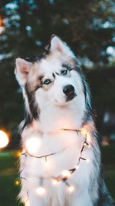 Baby Animals Pictures, Cute Animal Photos, Cute Animal Drawings, Dog Pictures, Animals Dog, Wild Animals, Cute Baby Dogs, Cute Dogs And Puppies, Pet Dogs