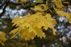 Kroniki Inowrocławskie: W poszukiwaniu piękna jesieni......Inowrocław