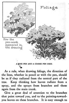 Drawing Pen and Ink for Foliage and Tree Leaves