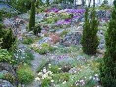 De pelarformade barrväxterna skapar intresse på höjden och blir en effektfull kontrast mot de lågväxta blommande kuddarna på berget. Dry Garden, Moss Garden, Forest Garden, Terrace Garden, Garden Plants, Garden Landscape Design, Garden Landscaping, Green Architecture, Garden Types