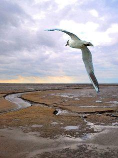 'Seeschwalbe über dem Watt' von Dirk h. Wendt bei artflakes.com als Poster oder…