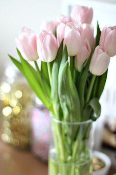 ballet pink tulips