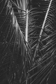 More palms than people || The Maldives