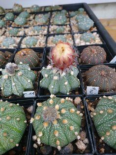 Succulents, Plants, Cacti, Succulent Plants, Plant, Planets