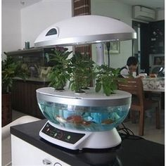 This is an awesome way to start with an aquaponic garden.  Use this to grow your herbs such as Basil, Thyme, Lavender, Cilantro, Chives.  It will make your kitchen smell great!  This is a great project for kids!