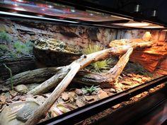 magnetic ledges, cling on background (pinned link for that) Reptile Habitat, Reptile House, Reptile Room, Reptile Cage, Reptile Tanks, Turtle Habitat, Bearded Dragon Terrarium, Bearded Dragon Cage, Bearded Dragon Habitat