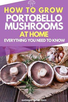 69 Best Crop Circles images in 2019 | Edible mushrooms