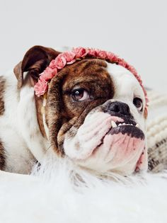 Puppy Flower Crown   For the free spirited pup, this lightweight and delicate flower crown is American handmade from preserved flowers and wrapped on an elastic band.