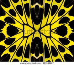 Butterfly Pattern?