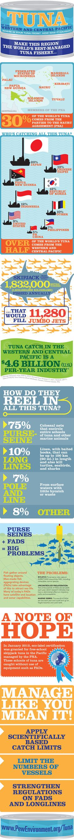 Fantastic Infographic about Tuna of the Western and Central Pacific.  Did you know Rare is about to start working in 11 sites throughout Micronesia? Fish Forever!
