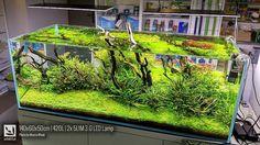 Open aquarium van Marcin Wnuk. De voorgrondplant? Dwergparelkruid. Vind je het wat? http://ift.tt/1S0cIdU
