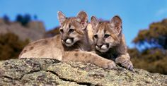 Alberta: Protect Wildlife and Ban the Use of Neck Snares