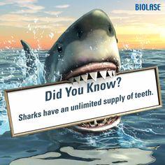 #DidYouKnow: Sharks have an unlimited supply of teeth. #dentist #teeth #shark