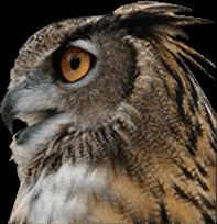 Owls are a treat to cats and small dogs just like Eagles and Coyotes. If you have owls coming out at night near your yard, this product may held scare them off.