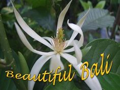 Bali is a great place to find some exotic flora