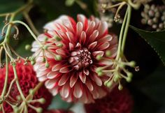 We adore dahlia flowers! Completely unique, these stunningly beautiful flowers are perfect for arranging in a vase or featuring in a bridal bouquet. Learn more about dahlias on our blog.
