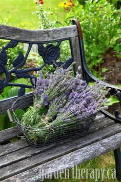 How Harvest English Lavender Plants for Recipes and Crafts - Garden Therapy Lavender Cottage, Lavender Garden, French Lavender, Lavender Blue, Lavender Fields, Lavender Flowers, Lavender Crafts, Lavander, Drying Lavender