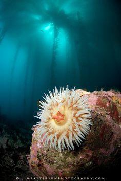 Underwater-Monterey-Bay-Reef-03.jpg (502×750)