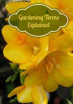 Gardening Terms Explained | Gardening 101