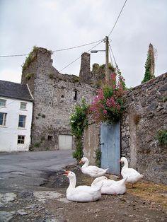 Goosed in Fethard, Ireland