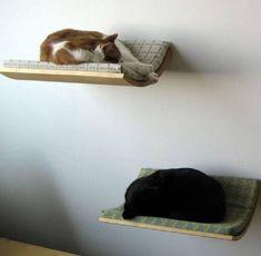 Designed for cats (34 photos) (24)