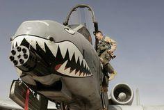 "The original ""angry bird?""  A-10 Warthog."