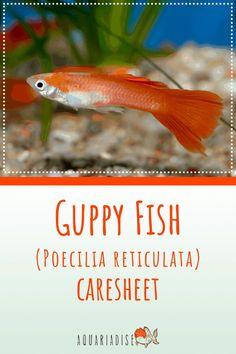 Aquarium Set, Tropical Fish Aquarium, Tropical Freshwater Fish, Freshwater Aquarium, Fish Care, Guppy, Colorful Fish, Betta, Fresh Water