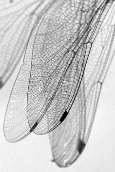 patterns in nature texture ~ patterns in nature texture ; patterns in nature texture sea shells ; patterns in nature texture design ; patterns in nature texture plants ; patterns in nature texture art Foto Picture, Sibylla Merian, Fotografia Macro, Black White, Foto Art, Belle Photo, Textures Patterns, Organic Patterns, Black And White Photography
