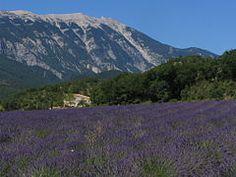 Provence - Wikipedia, the free encyclopedia