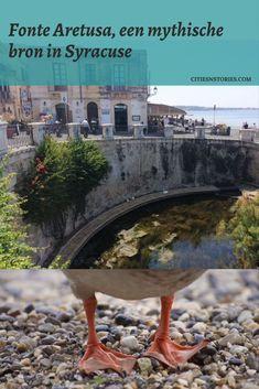 In deze blog lees je wat de zoetwaterbron fonte Aretusa in Syracuse zo bijzonder maakt om een keer te bezoeken!