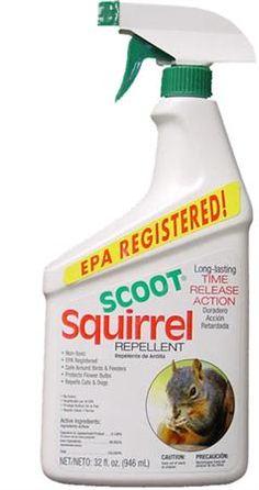 SCOOT SQUIRREL REPELLENT RTU, QUART