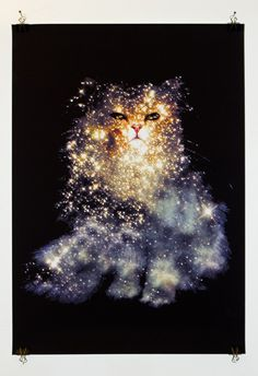 I have The British Shorthair and The Pelican Nebula on a shirt but I'd love  a print of another of Zippora Lux's Celestial Cats.