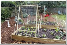 cucs, gourds...simple trellis