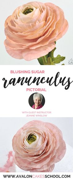 How to make a gorgeous ranunculus sugar flower with guest instructor Jeanne Winslow! Step by step photos and written process! only at http://avaloncakesschool.com
