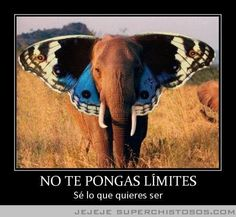 No te pongas límites. Sé lo que quieres ser.