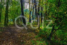 Qdiz Stock Photos | Autumn Nature with Trees Among Fallen Leaves,  #autumn #background #beautiful #beauty #blue #branch #City #colorful #day #environment #foliage #golden #grass #green #idyllic #land #landscape #leaf #leaves #multicolored #nature #nobody #orange #outdoors #park #plant #scenery #scenic #season #sunny #tranquil #tree #view #weather #wood #yellow