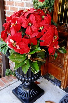 POINSETTIA~For the front door: Fake poinsettas + magnolia leaves + repainted urn Christmas Topiary, Front Door Christmas Decorations, Christmas Front Doors, Christmas Flowers, Christmas Porch, Christmas Makes, Christmas Centerpieces, Country Christmas, White Christmas