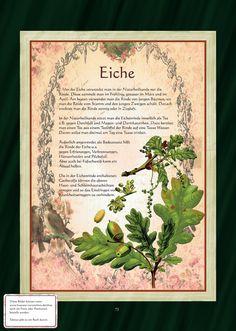 Eiche - Eichenblättertee